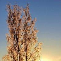 Земное солнышко зимы... :: Лесо-Вед (Баранов)