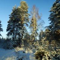 мороз и солнце-день чудесный :: Михаил Жуковский