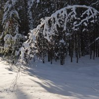 Зима :: Ирина Кузина