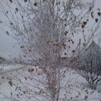 вот она, зима, дождались.... :: Татьяна Танюша