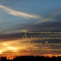 Осень - большая золотая птица... :: Вера (makivera)