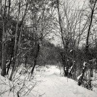 Тропка :: Андрей Качин