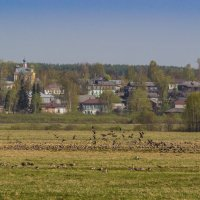 Весенний гомон :: Андрей Вигерчук