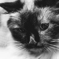 Мой котейка :: Артём Брав