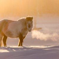 Мороз :: Михаил Потапов