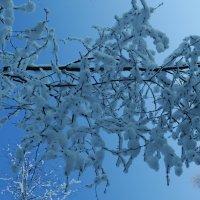 морозные , снежные ветви :: Михаил Жуковский