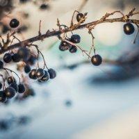 Замороженные ягодки :: Наташа Кошкина