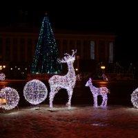 Новый год в Великом Новгороде :: Денис Кузнецов