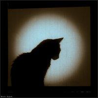 лунный кот :: Sergey Bagach