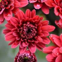 цветок :: steklotekstolit Пронин