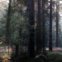 Утро в сосновом лесу :: Юрий Цыплятников