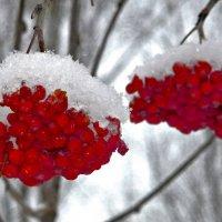 Свежий снежок :: Александр Садовский