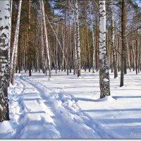 Лыжная прогулка в лесу :: Лидия (naum.lidiya)