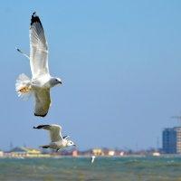 Навстречу ветру :: Ольга Голубева