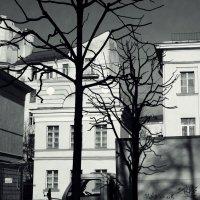 скоро весна :: sv.kaschuk