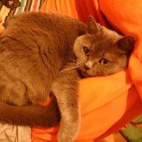 """Очень удобное """"кресло-качалка""""! :: Galina194701"""