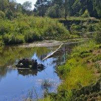 На реке :: Владимир Максимов