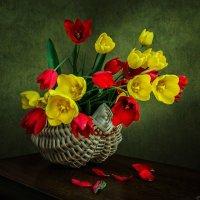 Всего лишь тюльпаны :: Ирина Приходько