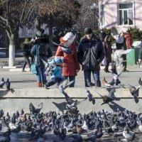 Любовь и голуби :: АЛЛА Смирнова