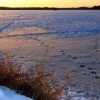 У озера на закате :: Татьяна Нижаде