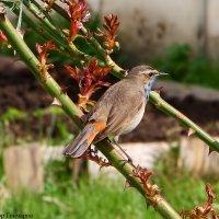 птиц :: Laryan1