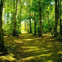 В лесу :: Вячеслав Емельянов