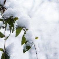 Зима , Краснодар )) :: Станислав Шадрин