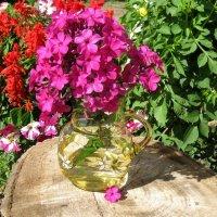 Мои цветочки :: Вера Андреева