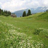 альпийский луг :: Olga