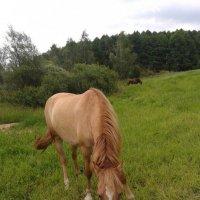 золотая лошадь :: Vladimir Sv