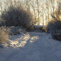 Зимняя дорожка :: Татьяна Копосова