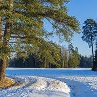 Зимняя прогулка. :: Виктор