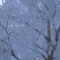 Снежная зима 2010г :: Елена