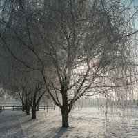 холодно :: Эльмира Суворова