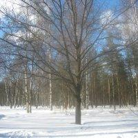Снежный март 2010 :: Елена