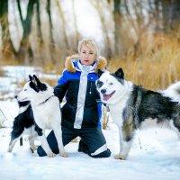 якутские лайки :: Света Солнцева