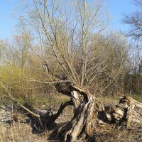 Сказочное дерево :: Валерия Кратенко