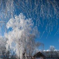 Снежное дерево :: Диана Попова