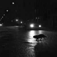 Ночной зверь :: Беспечный Ездок