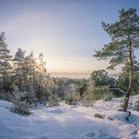 зима :: Соня Орешковая (Евгения Муравская)