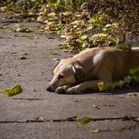 Одиночество :: Ирина Лядова