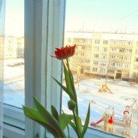 Персональная весна )) :: Зоя )