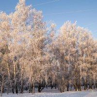 зимнее утро :: Лариса Батурова