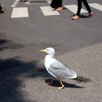 Пешеход :: Алина