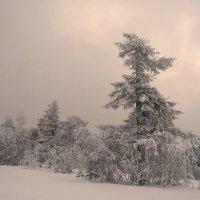 Снежный плен :: ИриSка &