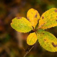 Осень в лесу :: Екатерина Макарова