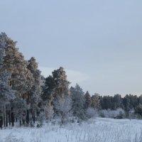 Наш зимний лес. :: Королева Надежда