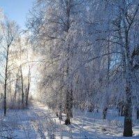 мороз и солнце :: Ольга Рывина