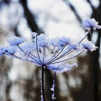 Зимние цветы. :: Oleg4618 Шутченко