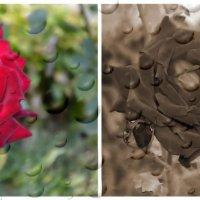 Красное и черное :: Ростислав